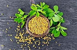 Полезные свойства чая хильба (Желтый чай, семена Пажитника) из Египта